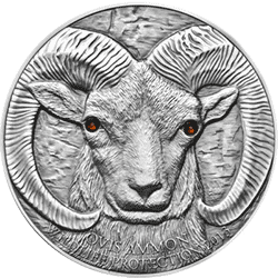 Mongolia - 2013 - 500 Togrog - Argali Ovis Ammon - monety